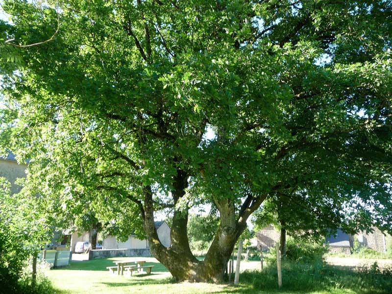 planter-un-arbre-tayrac