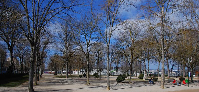 arbres-jardin-public