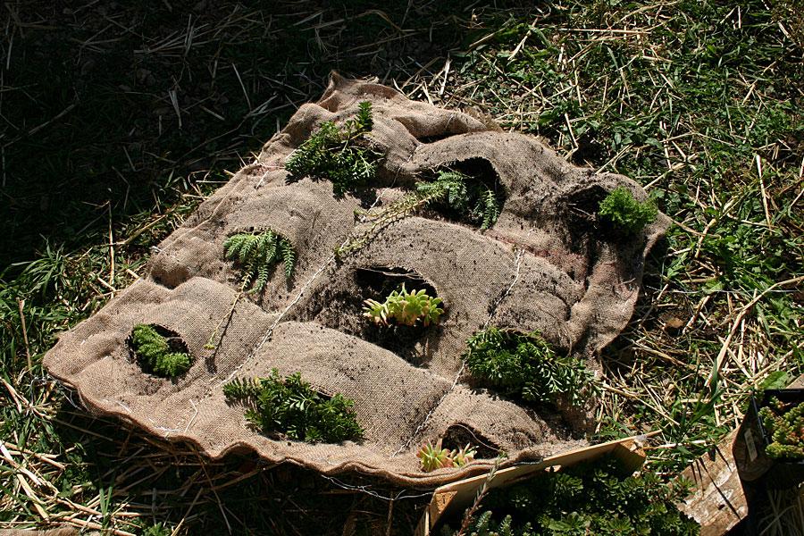 plantation-mur-vegetal-ecole-tricot