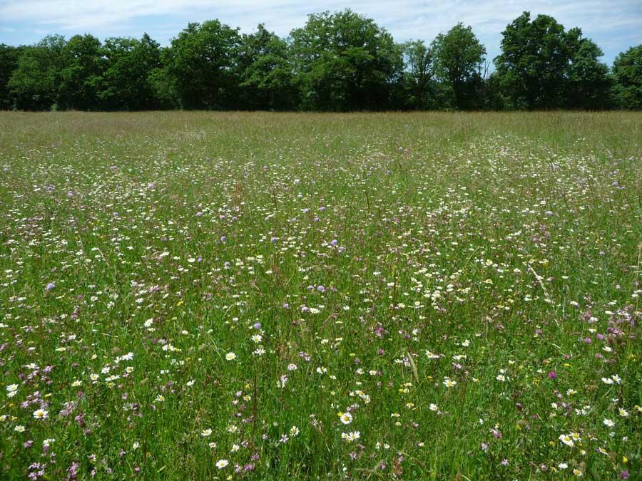 prairies-fleuries-1